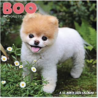 cutest dog in the world 2019
