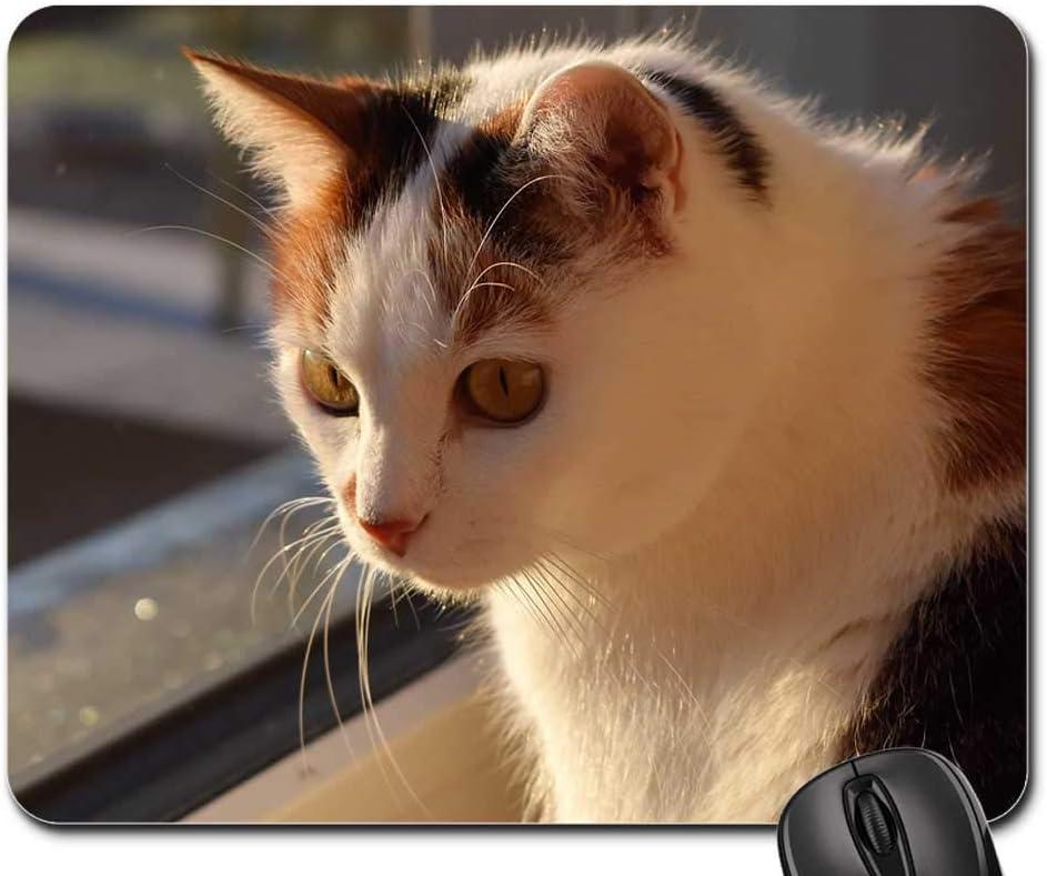 Las Vegas Mall Mouse Pad - Cat White Animal Pet Sale special price Mieze Creature 12