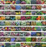 500Mix Wildflower Butterfly Seeds, hardy ,heat and shade tolerant Ornamental flower , four seasons little care, free shipping