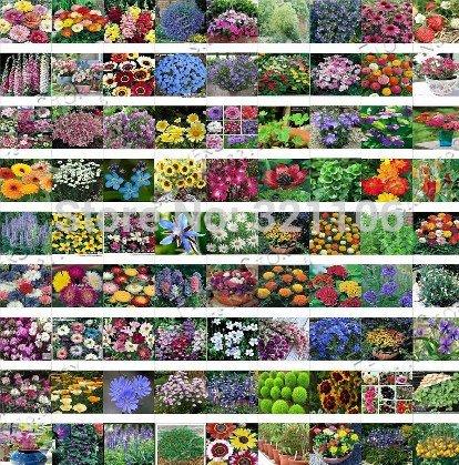 Graines 500Mix Wildflower Papillon, hardy, fleur de chaleur et tolérante à l'ombre d'ornement, quatre saisons peu de soins, Livraison gratuite
