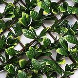 Suinga CELOSIA JARDIN de mimbre con hojas de LAUREL, 1 x 2 metros