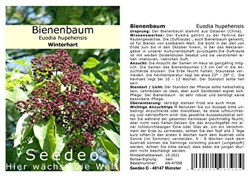 Seedeo® Bienenbaum (Euodia hupehensis) 30 Samen