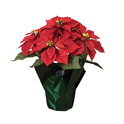 Poinsettia Plant Amazon Com