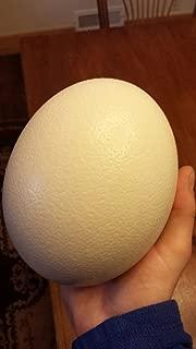Premium Ostrich Eggshell