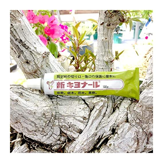 Kiyonal new bonsai pruning cutting paste 100g 3 japanese cutting paste for bonsai tree after pruning. It is essential bonsai tool from japan. Please apply kiyonal to the cut branch, limb, twig to protect cut end. Paste will last a very long time. Dries quickly and easy to apply.