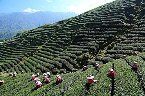 Tea Heart R 台湾茶 お茶 阿里山 高山茶 烏龍茶 茶葉 ウーロン茶 Organic Farm SGS Taiwan Alishan 阿里山, 150g