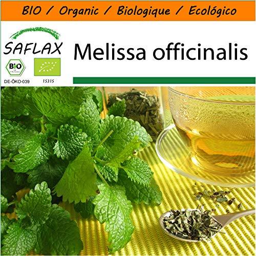 SAFLAX - Jardin dans le sac - BIO - Mélisse officinale - 1000 graines - Avec substrat de culture dans un sac de levage facile à manipuler. - Melissa officinalis