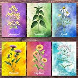 Postkarten - Set Wildkräuter / 6 Kräuter Karten mit Brennnessel, Kamille, Mariendistel, Schafgarbe, Johanniskraut, Ringelblume