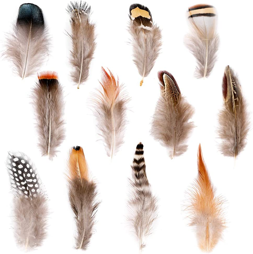 Ballinger 240pcs 12 Styled Natural Feathers Assorted Mixed Feath Free shipping New Ranking TOP8