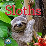Original Sloths Wall Calendar 2022