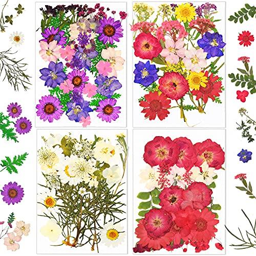 Libershine 126 Piezas Flores Prensadas Secas, Naturales Flores Prensadas Reales Conjunto de Flores para Bricolaje Vela Resina Joyería Colgante de Uñas Manualidades