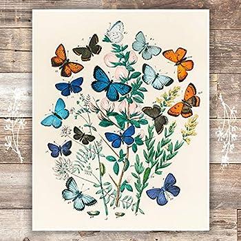 Vintage Butterfly Wall Art Print - Unframed - 8x10 | Botanical Wall Decor