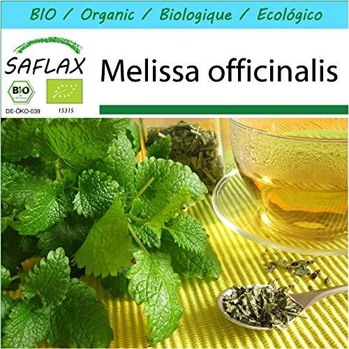 SAFLAX - Kit cadeau - BIO - Mélisse officinale - 1000 graines - Avec boîte cadeau/d'expédition, autocollant d'expédition, carte cadeau et substrat de culture - Melissa officinalis
