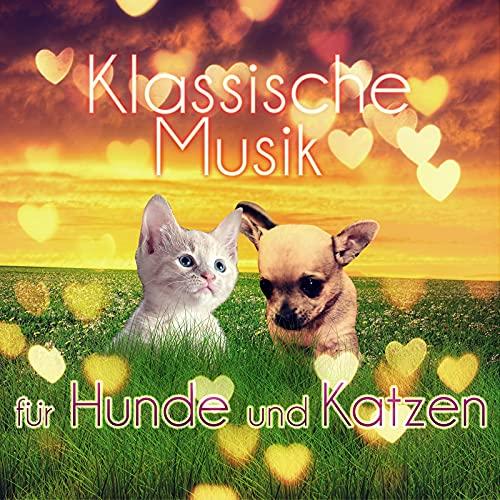 Klassische Musik für Hunde und Katzen – Entspannungsmusik Wenn sie Allein zu Hause, Beruhigende Musik, Instrumentalmusik für Haustiere, Gelassenheit für Welpen & Kätzchen, Tiefenentspannung