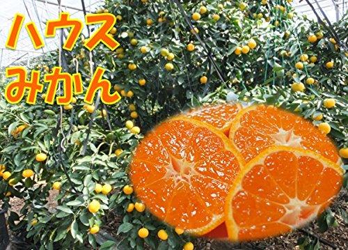 佐賀県・鹿児島県産 ハウスみかん 1箱:約5kg サイズ:2Lから4L