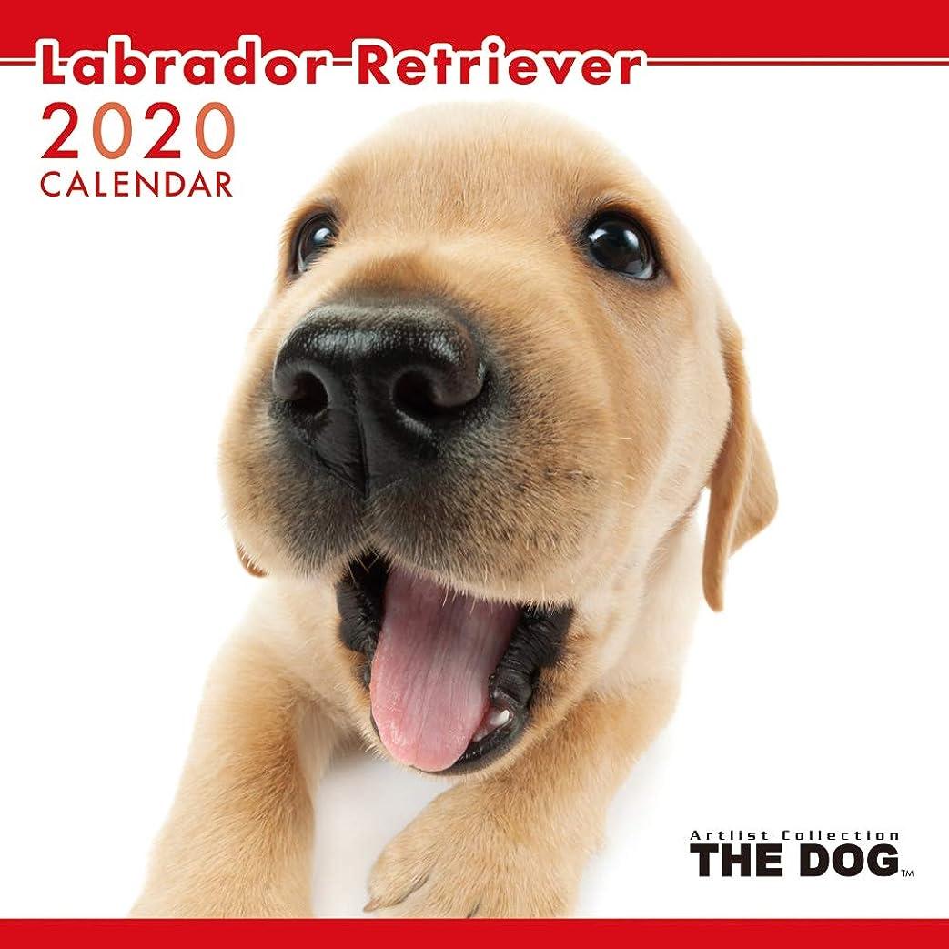 謝罪するソファー分注するアーリスト 2020 THE DOG カレンダー ラブラドールレトリーバー