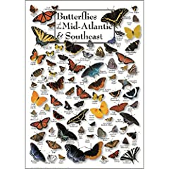"Made in USA 19"" X 27"" overall size This stunning poster includes 79 species of butterflies, both common and exotic found in the the following states: New York, New Jersey, Pennsylvania, Ohio, Indiana, Kentucky, Tennessee, Virginia, West Virginia, Del..."