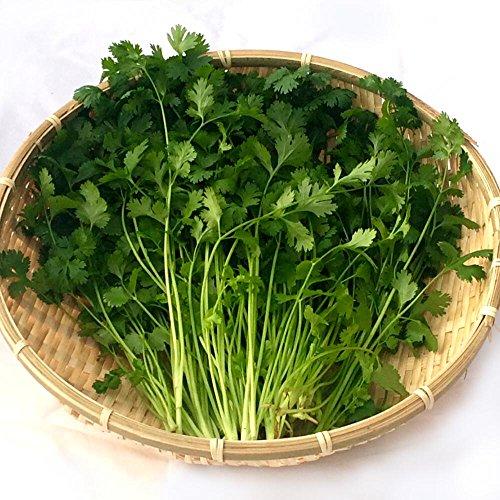 千葉県産 パクチー 生野菜 鮮度保持フィルム包装 200g ヤマトCL