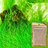 Ofanyia Aquarium Plants Seeds <span class='highlight'>Aquatic</span> Love Leaf Carpet Water Grass for Home <span class='highlight'>Fish</span> Tank Rock Lawn Garden Decoration Easy Care Hardy and Long Lasting Plant