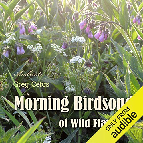 Morning Birdsong of Wild Flatlands cover art