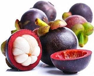 Caiuet Seed, 10pcs/Pack Mangosteen Seeds Rare Fruit Seeds Organic Garden Fruit Seeds, for Home Garden Planting