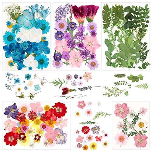 fanshiontide 131 Stück Natürliche Getrocknete Gepresste Blumen Gemischt Mehrere Getrocknete Blütenblätter Blütenblätter Für DIY Harz Schmuck Nagel Anhänger Blumendekore