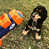 Nerf Dog Balle de Tennis Blaster Jouet