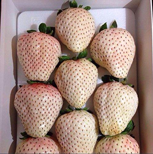 100pcs 2016 Nouveau Rare 6colors Super Sweet Seeds géant Strawberry fleurs en pot Berry Graines de graines de fruits 6