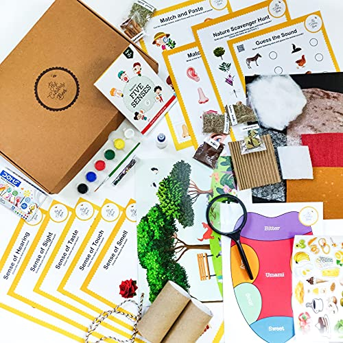 The Curious Bees - Explore Five Senses Theme Activity Box | 3+ Year Age | Craft Kit for Kids, Educational Kit, Fun & Learning Activity Kit | Early Childhood Education