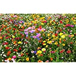 LiveMoor Wild Flower Meadow Seeds - Help Save The UK Bee Population