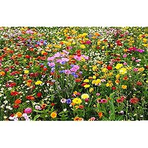 LiveMoor Wild Flower Meadow Seeds - Help Save The UK Bee Population