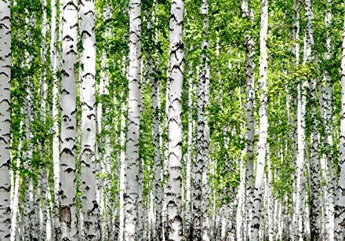 wandmotiv24 Fototapete Birkenwald Nahansicht Dicht, S 200 x 140cm - 4 Teile, Fototapeten, Wandbild, Motivtapeten, Vlies-Tapeten, Birken Bäume Wald Blätter M5835
