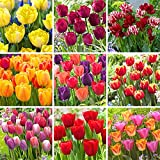 Tulip Bulbs,Imported Root,Quality Cut Flowers,Mysterious Flowers,Famous Potted Varieties-10 Bulbs,Mix