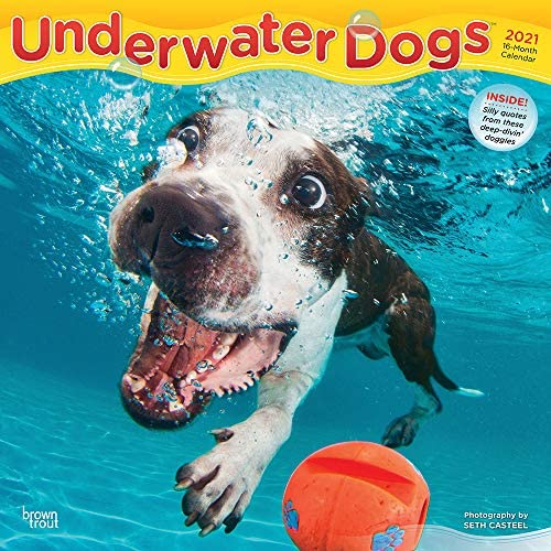 Underwater Dogs 2021 12 x 12 Inch Monthly Square Wall Calendar Pet Humor Puppy product image