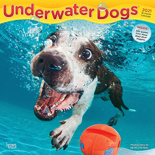 Underwater Dogs 2021 12 x 12 Inch Monthly Square Wall Calendar, Pet Humor Puppy