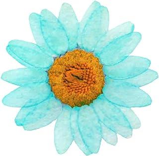 Fleurs pressées, marguerite turquoise 20pcs pour art floral, artisanat, fabrication de cartes, scrapbooking