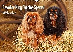 Whole-colour Cavalier King Charles Spaniel (Wandkalender 2017 DIN A3 quer): Cavalier King Charles Spaniel ausschliesslich in den Farbschlaegen ruby und black&tan (Monatskalender, 14 Seiten )[Petra Wegner]