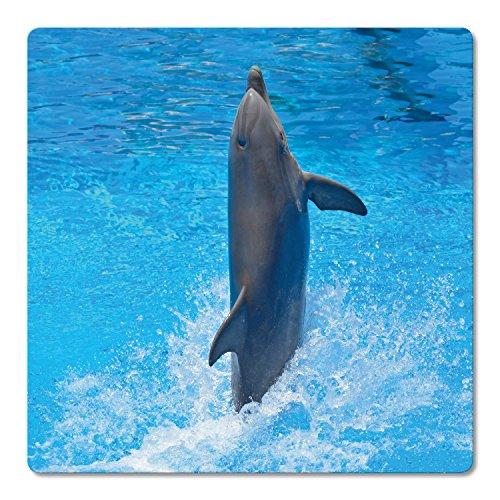 ADDIES Glas-Untersetzer 6-TLG.Set Bedruckt Motiv Delfin/Delphin in hochwertiger Klarsicht-Geschenkbox & Korkrückseite, Tier-Motive