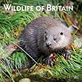 Wildlife of Britain 2021 12 x 12 Inch Monthly Square Wall Calendar, Wildlife Animals Photography