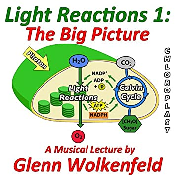 Light Reactions 1: The Big Picture