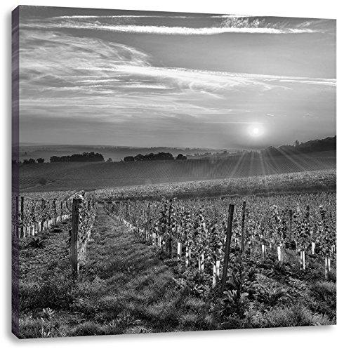 Wijngaard in Bergerac FrankrijkCanvas Foto Plein   Maat: 40x40 cm   Wanddecoraties   Kunstdruk   Volledig gemonteerd