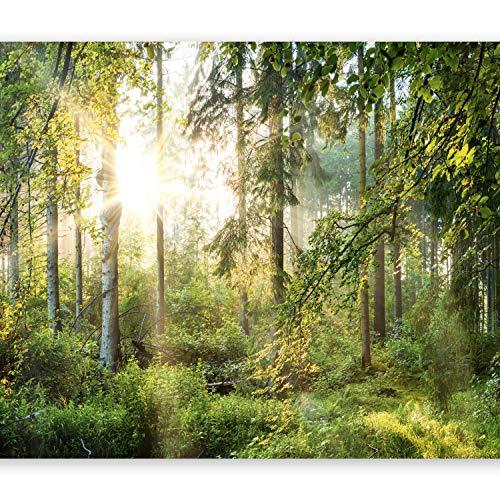 murando Fototapete selbstklebend Wald 294x210 cm Tapete Wandtapete Klebefolie Dekorfolie Tapetenfolie Wand Dekoration Wandaufkleber Wohnzimmer Landschaft Natur Sonne Grün Bäume c-C-0032-a-b