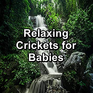 Relaxing Crickets for Babies