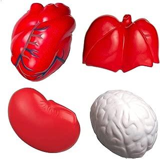 GL Toys Anatomy Stress Toy Set of 4 (Heart Veins, Kidney, Lungs Brain)