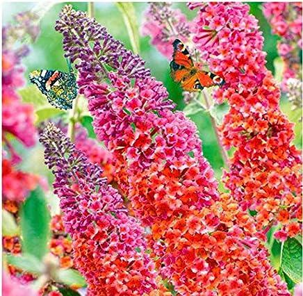 Blumen XGLL LED Pflanzenlampe Vollspektrumlicht 40W E27 290 LEDs Wachstumslampe f/ür Wasserpflanzen Gem/üse Saatgut Wachstumslampe,40W Topf- und Zimmerpflanzen