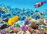 PICSonPAPER Hochwertiges Poster Unterwasserwelt 70 cm breit