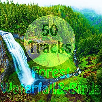 50 Tracks Forest Waterfall & Birds Sounds with Ambient Music Nature Sounds for Meditation Relaxation Spa Study