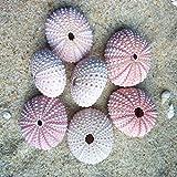 IMIKEYA 4pcs di Conchiglie di Riccio di Mare Naturali Conchiglie per imbarcazioni Fai da Te e Decorazioni per la casa di Nozze Vaso per Piante Contenitore di Ananas (Colore Casuale)