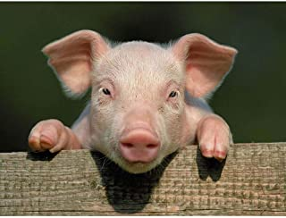 Best cute pig artwork Reviews