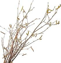 Flores secas artificiais, JUSTDOLIFE 12 peças de broca seca criativa natural de bétula decorativa haste seca para decoraçã...
